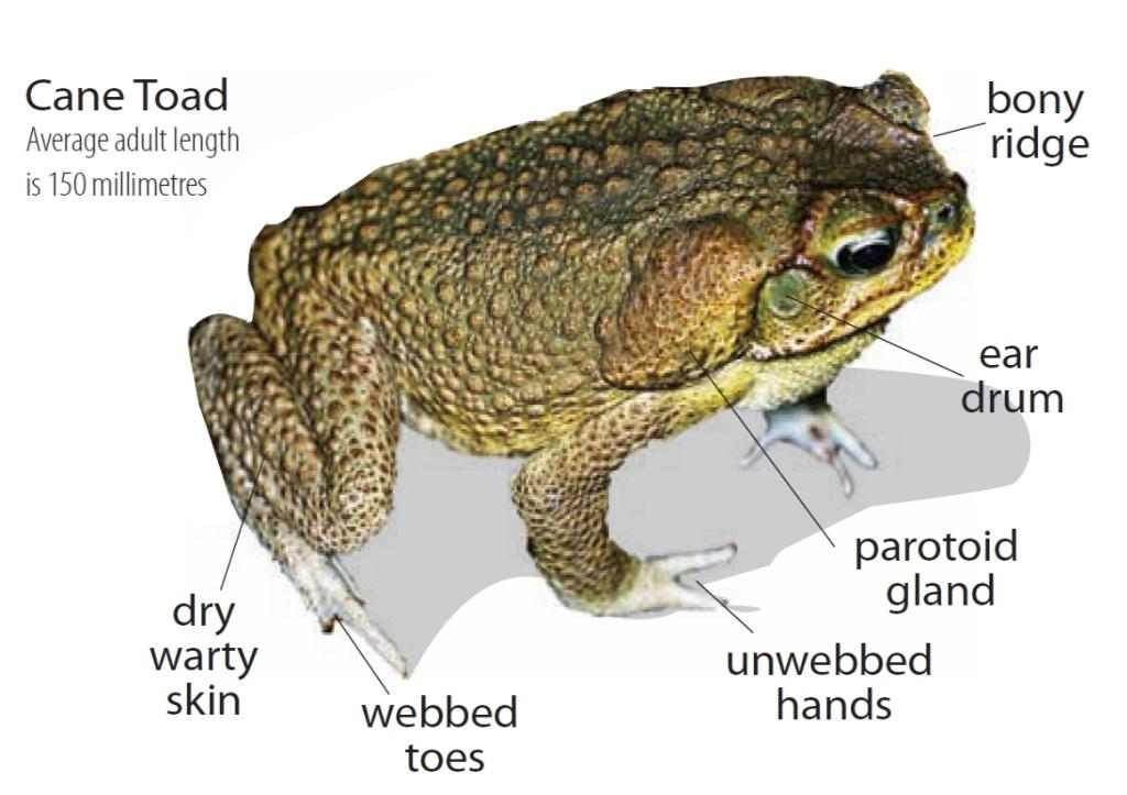 toad diagram  untitled on emaze